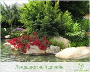 Дизайн водоема для купания