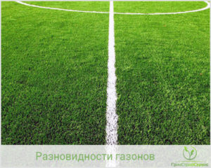 рулонный газон Казань Набережные Челны