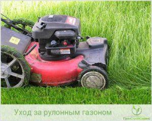 Уход за газоном летом