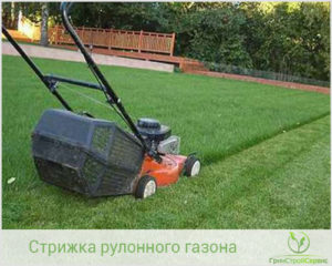 Как правильно стричь рулонный газон