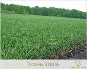 рулонный газон Казань ГринСтройСервис