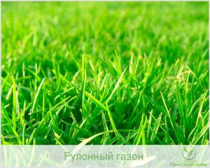 Разновидности трав для газона