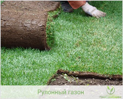Как сажать рулонный газон осенью 15