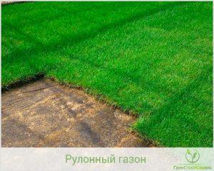 Посевной или рулонный газон выбрать
