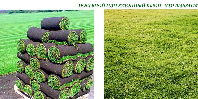 Посев газонной травы своими руками летом 16