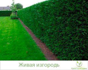 Ландшафтные работы: посадка и уход за живой изгородью в Казани
