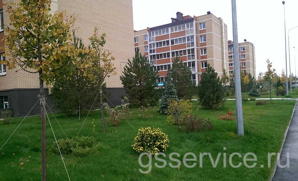 Посадка деревьев на придомовой территории многоквартирного дома