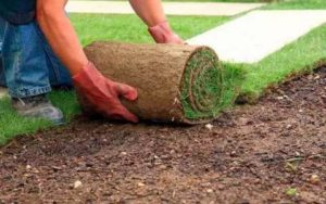 Как самостоятельно укладывать рулонный газон: полезные советы