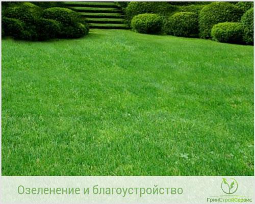 Рулонный газон - быстро озеленит ваш участок