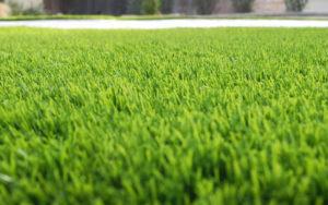 Рулонный газон или газонная трава: что выбрать?