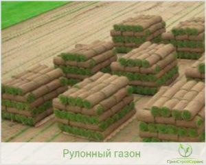 Советы по выбору газона