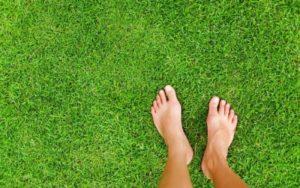 Выбираем газон для дома и дачи