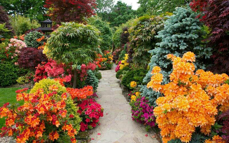 Как выбрать декоративные растения для сада?
