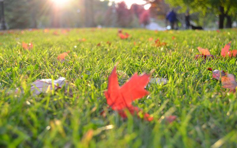 Как ухаживать за газоном осенью и подготовить его к зиме