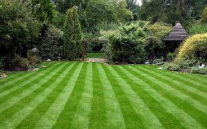 Правильная укладка рулонного газона: технология от профессионалов