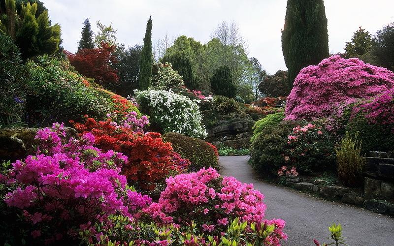 Подбираем кустарники для сада