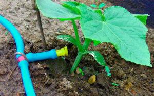 Как организовать полив растений на даче