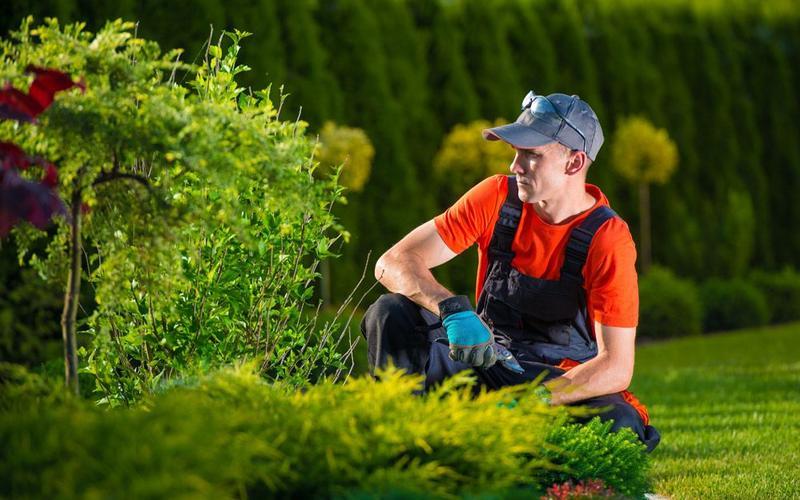 Уход за садом и услуги садовника