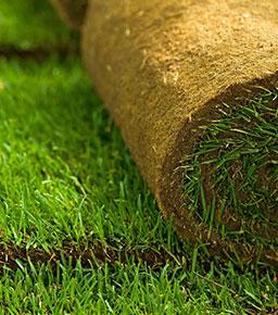Рулонные газоны отборной селекции город Москва